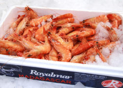 Crevettes & Gambas - LES PIRATES - poissonnerie - produits locaux - mediterranee - Mouans-Sartoux Grasse 06