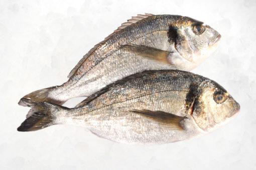 Dorade - LES PIRATES - poissonnerie - produits locaux - mediterranee - Mouans-Sartoux Grasse 06