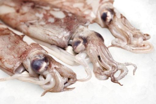 Encornet - LES PIRATES - poissonnerie - produits locaux - mediterranee - Mouans-Sartoux Grasse 06