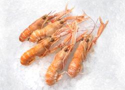 Langoustines - LES PIRATES - poissonnerie - produits locaux - mediterranee - Mouans-Sartoux Grasse 06