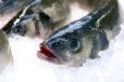 Loup - Bar - LES PIRATES - poissonnerie - produits locaux - mediterranee - Mouans-Sartoux Grasse 06