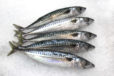 Maquereau - LES PIRATES - poissonnerie - produits locaux - mediterranee - Mouans-Sartoux Grasse 06