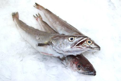 Merlu - LES PIRATES - poissonnerie - produits locaux - mediterranee - Mouans-Sartoux Grasse 06