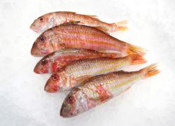 Rouget - LES PIRATES - poissonnerie - produits locaux - mediterranee - Mouans-Sartoux Grasse 06