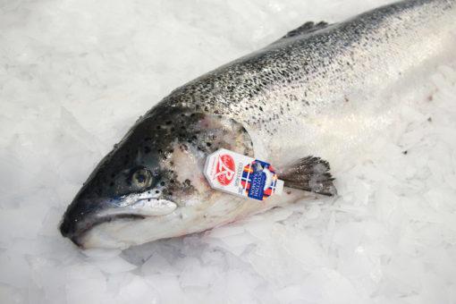 Saumon - Ecosse - Label Rouge - LES PIRATES - poissonnerie - produits locaux - mediterranee - Mouans-Sartoux Grasse 06