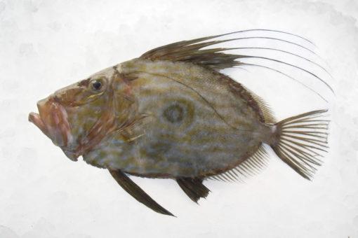 St-Pierre - LES PIRATES - poissonnerie - produits locaux - mediterranee - Mouans-Sartoux Grasse 06