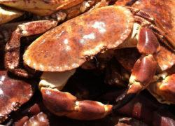 Tourteaux - LES PIRATES - poissonnerie - produits locaux - mediterranee - Mouans-Sartoux Grasse 06