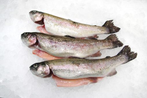 Truite - LES PIRATES - poissonnerie - produits locaux - mediterranee - Mouans-Sartoux Grasse 06