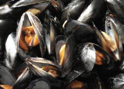 Moules - LES PIRATES - poissonnerie - produits locaux - mediterranee - Mouans-Sartoux Grasse 06